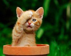 Kitten Korner